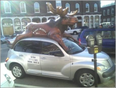 cool_moose